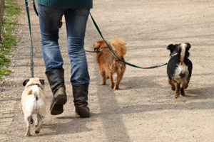 The Auckland Council plans to increase dog registration fees from July 1. Photo / Thinkstock