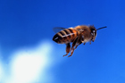 Some bees are thrill-seekers while other opt for a more cautious attitude to life. Photo / Thinkstock