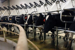 Dairy product prices are expected to be volatile. Photo / Sarah Ivey