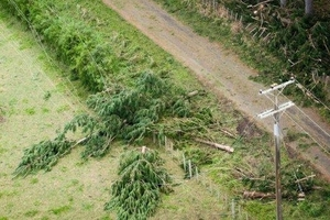 Power lines brought down by the strong winds over the weekend may take weeks to repair. Photo / supplied
