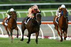Black Caviar leads the field. Photo / Getty Images