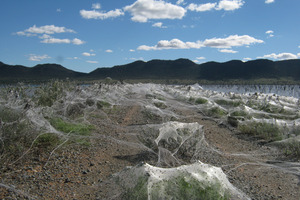 Spiders webs caused by recent flooding. Photo / Supplied