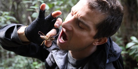 Bear Grylls eating a weta in New Zealand. Photo / Supplied