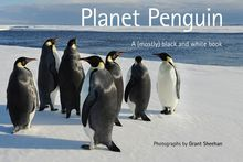 Planet Penguin. Photo / Supplied