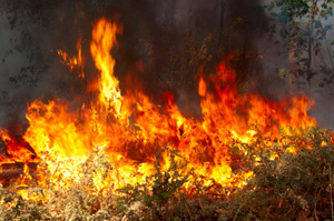 Two women almost burnt to death in a bushfire during a marathon. Photo / Thinkstock