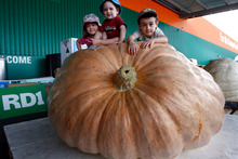 Entrants in the RD 1 pumpkin growing contest. Scaling great heights are 3-year-old Lily, 1-year-old Ben and 5-year-old Daniel Barton atop the 721kg giant pumpkin. Photo / Northern Advocate