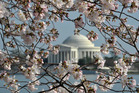 Jefferson Memorial is seen through cherry blossom trees on the National Mall in Washington DC.