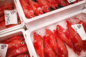 Tokyo's bustling Tsukiji fish market is one of the best places to scratch the surface of Japanese life. Photo / Thinkstock