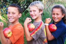 'Monty's Surprise' apples have particularly high levels of antioxidants. Photo / CTCR TRUST