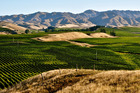 The Tiki vineyards in Marlborough, Waipara and Gibbston Valley, are farmed under the Maori principles of Kaitiakitanga - guardianship, protection and preservation of the land. Photo / Thinkstock