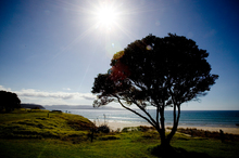 Tawharanui Regional Park marine and bird sanctuary. Photo / APN