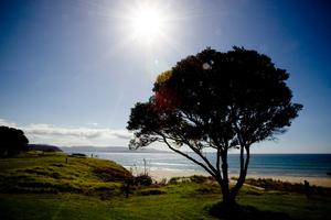 Tawharanui Regional Park marine and bird sanctuary. Photo / APN