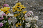 Flowers amid the rubble of Ishinomaki, one the areas hardest hit by the tsunami. Photo / Michael Dickison