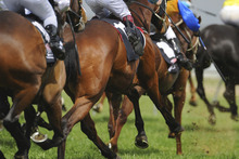 Above Average has emerged as the best jumps prospect in more than a decade. Photo / Thinkstock
