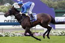 Bead Of Courage is a sound each-way prospect at Pukekohe today. Photo /  Richard Robinson