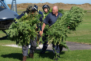Officers carrying some of the cannabis plants located in a recent aerial cannabis operation in Wanganui. Photo / Supplied