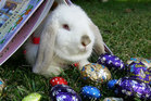 Easter is a time of fun, but it can also be a time of peril. Photo / The Aucklander