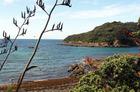 Leigh's harbourside native bush is a refuge to native birds. Photo / Janna Dixon