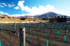 The upside of Central Otago: stunning views and soils delivering mineral richness. Downside: frost can be a problem, along with fierce winds racing between mountains and valleys. Photo / Thinkstock