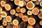 Wood pulp could be processed into fuel ethanol, which has been used for high performance cars including V8 racers.  Photo / Thinkstock
