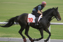 So You Think limbers up for the Dubai World Cup last month. Photo / AP