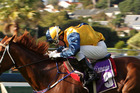 Veyron was too good last year in the Easter Handicap at Ellerslie. This year he has 59kg and a wide barrier to contend with. Photo / APN
