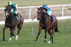 Desert Lad (right) and Generous Type are trifecta chances with Credit Crunch in the second race at Rotorua today. Photo / APN