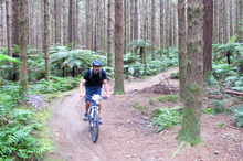 Alex Robertson cycles through the Redwood Forests with Mountain Bike Rotorua. Photo / Jaqui Robertson