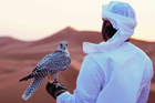 A falcon in the Abu Dhabi desert. Photo / Abu Dhabi Tourism