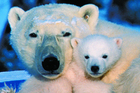 It's magnificent to see polar bears unafraid, at home in their world. Photo / Tourism Manitoba