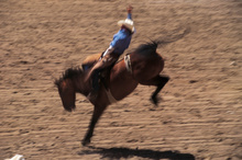 Horses and bulls will be back bucking at Hamilton's Claudelands Arena in November. Photo / Thinkstock