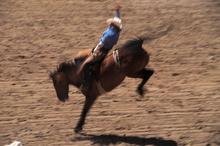 Horses and bulls will be back bucking at Hamilton's Claudelands Arena in November. Photo / Thinkstock