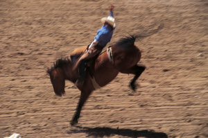 SAFE are disappointed the council is unmoved by continued animal cruelty at rodeos. Photo / Thinkstock