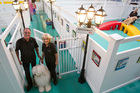 Rob and Carole Ellis started their boarding pet-care enterprise in a former electrical warehouse in Mt Wellington. Photo / Richard Robinson