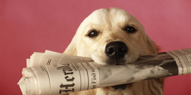 A well-done online newsletter can make a big difference. Photo / Thinkstock