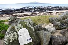 The Takapuna reef fossil forest. Photo / Steven McNicholl