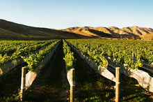 Marlborough is a flag-bearing region delivering pinot noir that can take on the world. Photo / Supplied