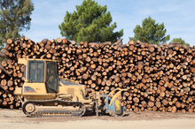 Forest products declined from levels a year ago. Photo / Thinkstock