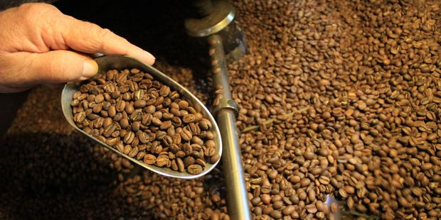 Checking the roast on coffee beans at Atiu Coffee. Photo / Jim Eagles