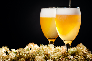 The sharp tang and lovely dryness of hops in beer gives a balance to the sweetness of the malt, but the key is: balance. Photo / Thinkstock