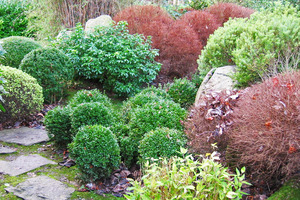 Compact shrubs with small foliage lend themselves well to topiary. Photo / Supplied