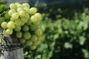 A grape's skin holds the fruit's best flavour. Grappa, the spirit made from the skins, is proof of that. Photo / Thinkstock