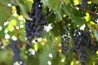 Argentina is the world's fifth-largest wine-producing country, and three-quarters of its wine is made in Mendoza. Photo / Thinkstock