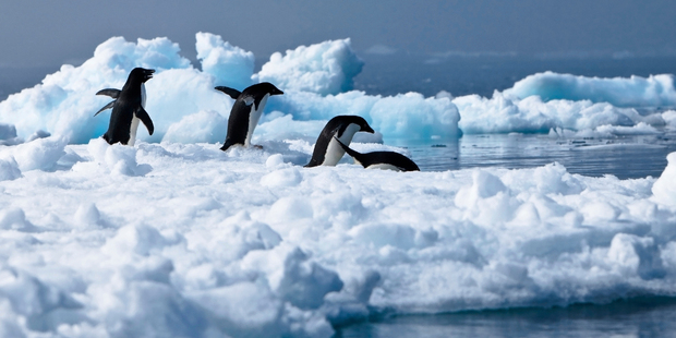 Travel industry experts say tourists are unlikely to be put off visiting Antarctica despite the sinking of a cruise ship which hit ice off King George Island. Photo / Thinkstock