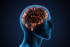 A global brain study led to the world's largest database of brain imaging results. Photo / Thinkstock