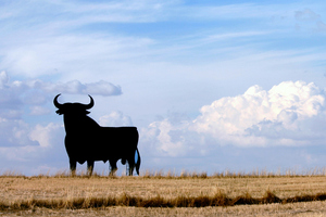 A bull has injured a man in Christchurch. Photo / Thinkstock