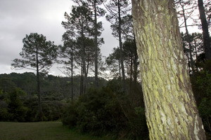 Trees are being grown purely for the carbon credits. Photo / Paul Estcourt
