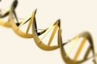 The breakthrough is a milestone in bringing nearer the possibility of sequencing a person's entire DNA. Photo / Thinkstock
