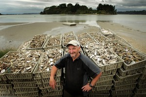 Rick Yorke pictured with some of the thousands of oyster shells fronm his oyster farm, in the background, in Ohiwa Harbour, near Ohope. Photo / Alan Gibson