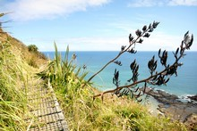 Te Henga Walkway, also known as the Hillary Trail. Photo / Natalie Slade